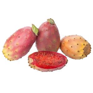 kaktusz pikkelysömör orvosság
